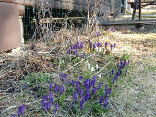 En  härlig tid är det nu och naturen står fullkomligt och vibrerar att få explodera ut i full blom och grönska!